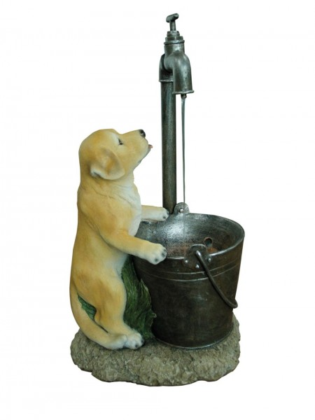 Puppy at Tap Water Feature