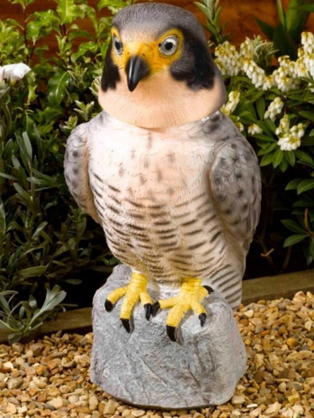 Peregrine Falcon with Moving Head