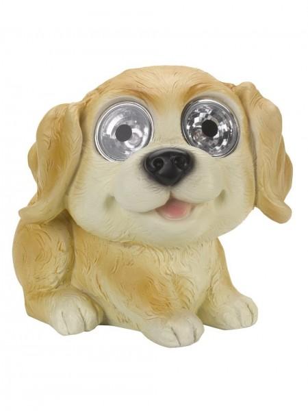 Bright Eye Dogs, Golden Labrador